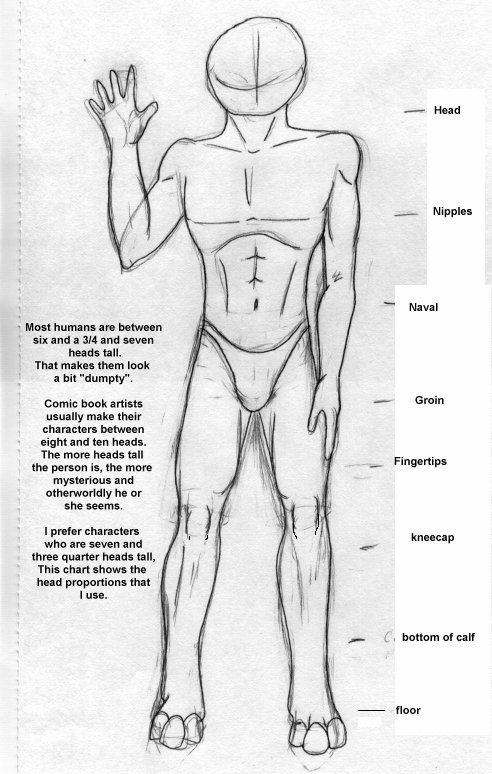 proportions of body. Correct Body Proportions